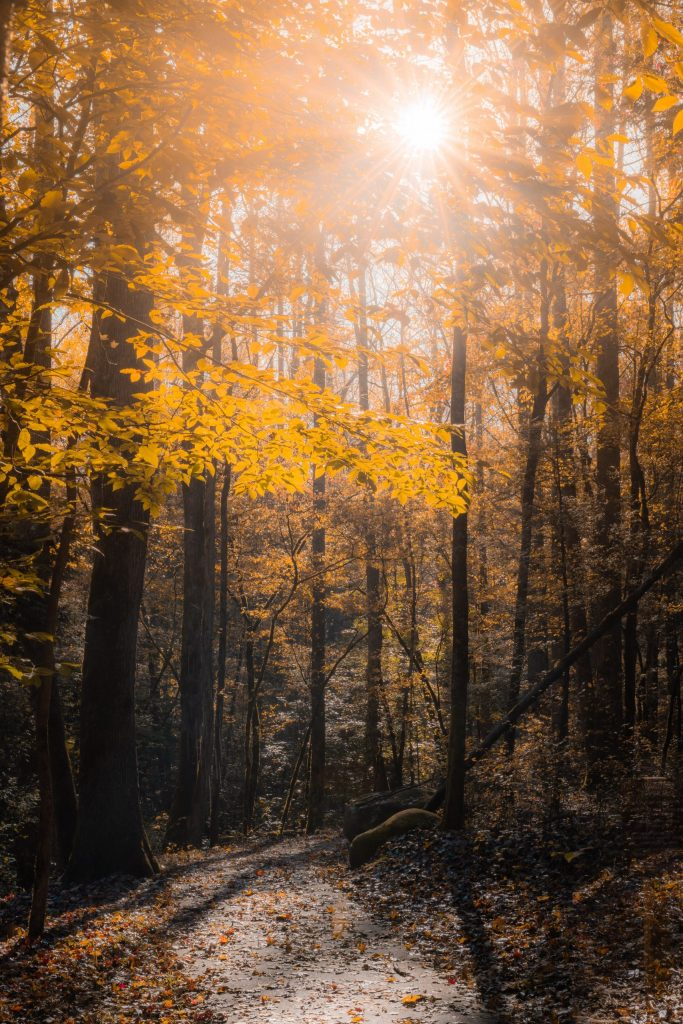 A forest with the sun shining through the top.