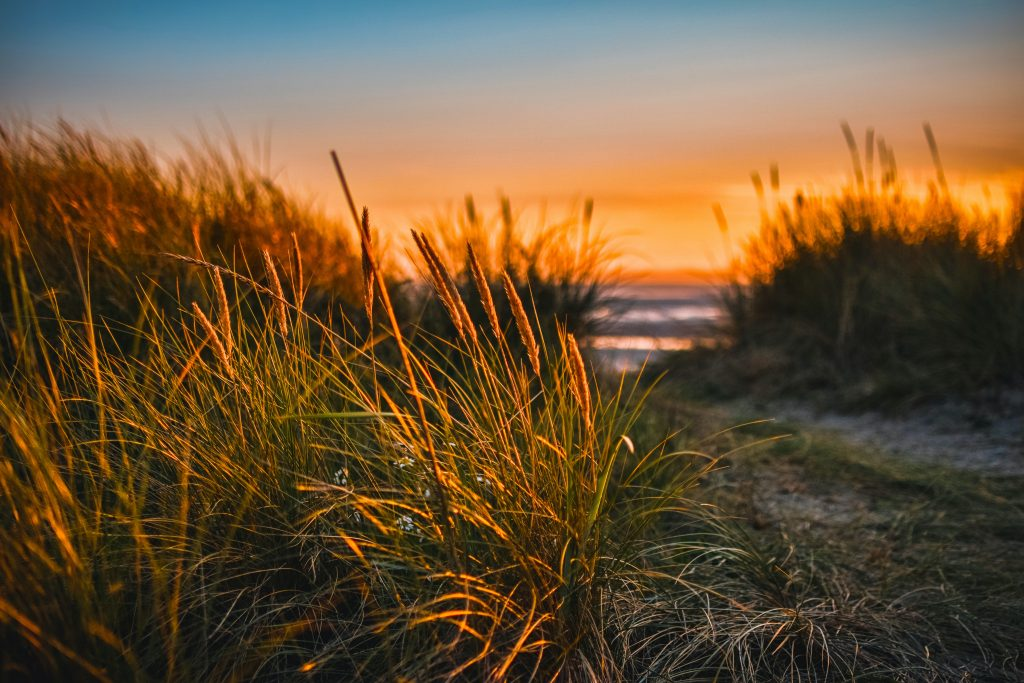 dunes at the seaside as the sun is setting